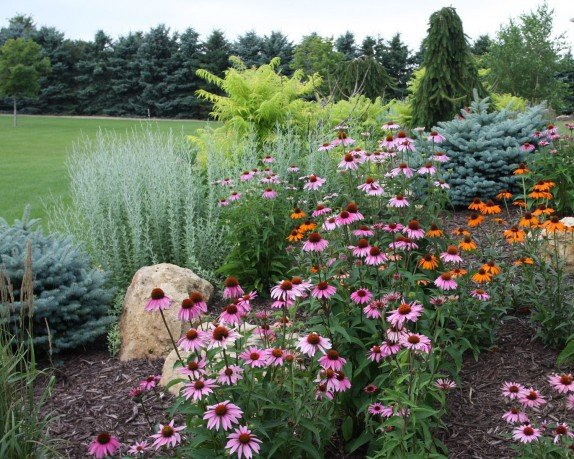 Layering Your Landscape with Pahl's Plants